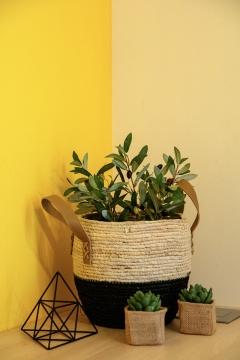 spatiograf_design_interior_brasov_interiology_decoratiuni_plante-723